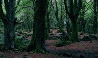 Edges Forbidden Forest, Spring