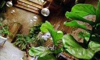 Greenhouse at Robichaux