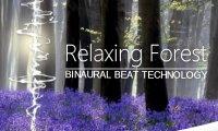 Relaxing Forest Walk