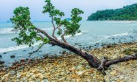 Calm Sea Pebbled Shore
