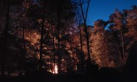 Nighttime camping in a deep forest
