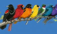 Mesmerizing Sound of Songbirds & Windchimes