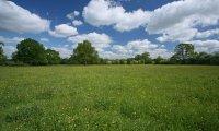 Imagine a calm, quiet field.