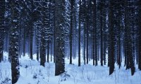 Group walking through a snow covered forest