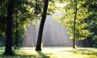 Relaxe com sons da natureza