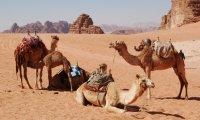 fantasy desert marketplace