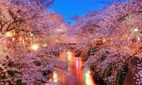 Cherry Blossom training ground