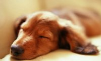 Puppy snooze background
