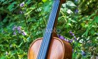 Forest Violin