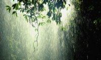 Gentle rainy day