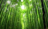 Relaxing Zen Forest