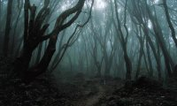 Night in Deep Forest