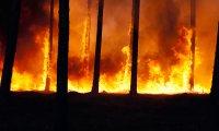 Walking through a Forest Fire