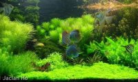 Zen Garden Underwater