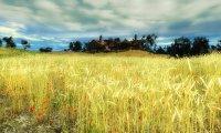 Walking in the fields around Murky Waters