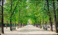 Morning in the  Jardin du Luxembourg