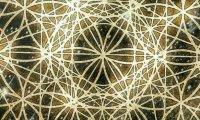 Multiplicated Organized Kaoss