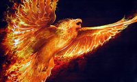 A Firebird on the Wing