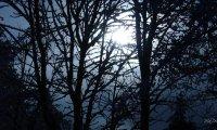 Northern Winter Walk