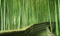 Bamboo Thoughts