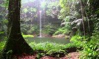 Light thunder in rainforest