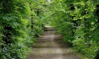 Walking to Greenest
