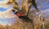 Hunting wild field birds