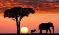 African Safari Ride