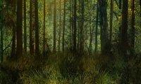 Fantasy middleland Forest.