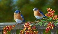 Morning Birdsong