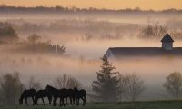 A misty morning in the country