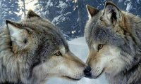 (The Last of the Wolf Lords, Mix 1)