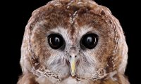 Owls and crickets