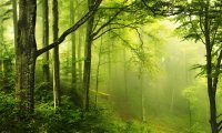 Relaxing forest sounds