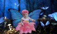 A walk through a fairy forest