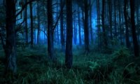 Lost in the Nighttime Forest