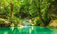 Summer Forest Stream