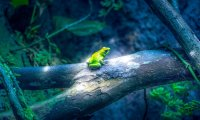 Warm summer nights with tree frogs, rain, breeze