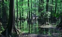 Swamp Adventure