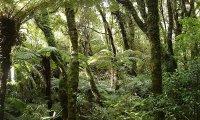 Island jungle