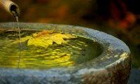 Garden Meditation