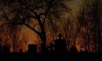 Cemetery Night Ambience