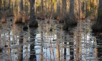 Spend a night in deep Louisiana